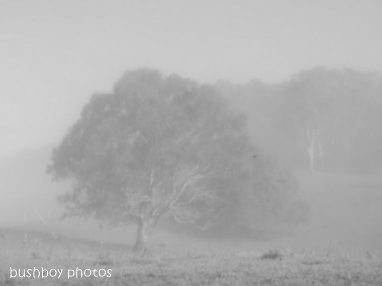 181025_blog challenge_blackandwhite_tree_fog_changed