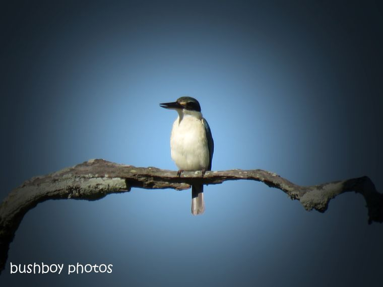 181025_blog challenge_photo_editing_forest kingfisher3