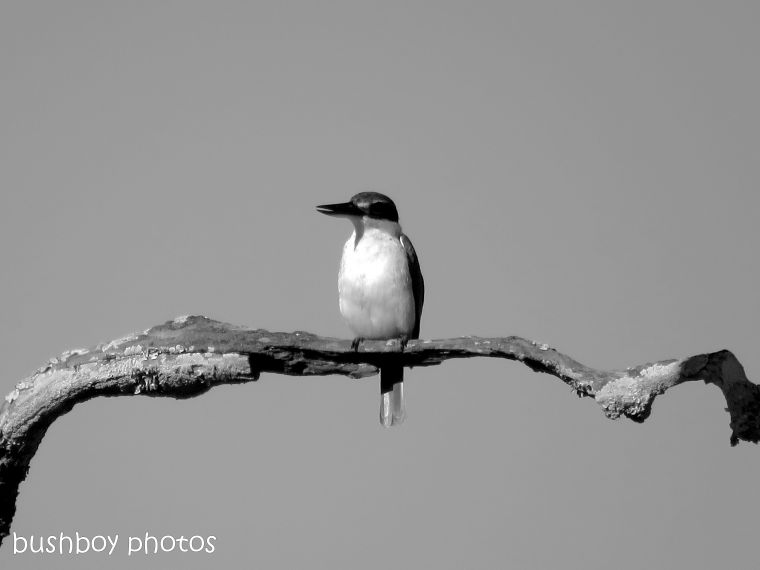 181025_blog challenge_photo_editing_forest kingfisher4