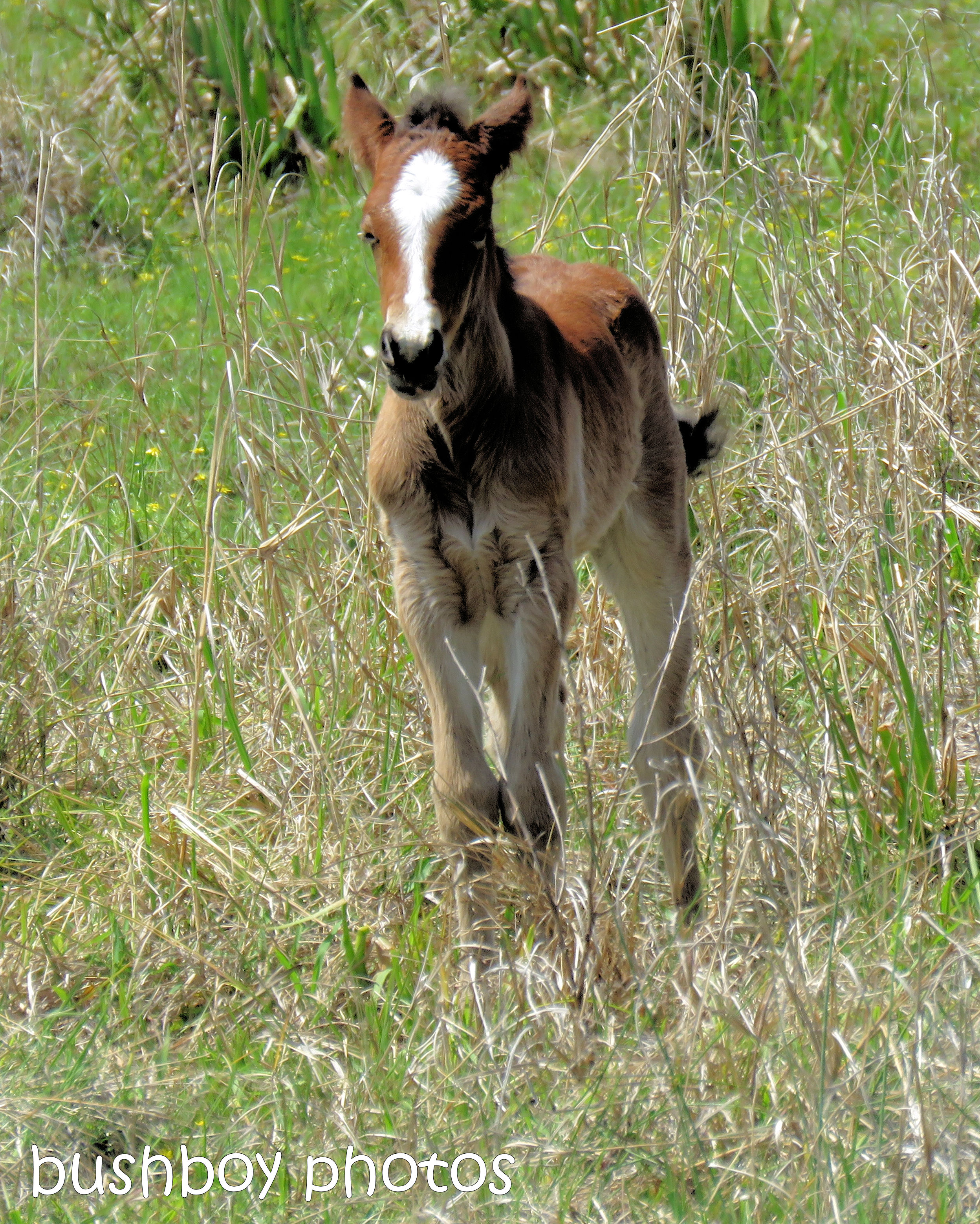 foal_named_lismore_sept 2018