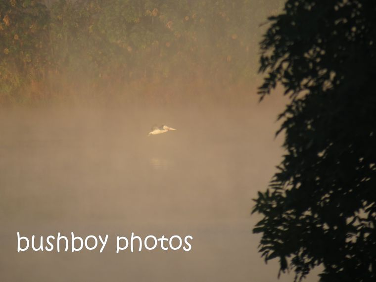 pelican_fog_clarence river_grafton_named_july 2014