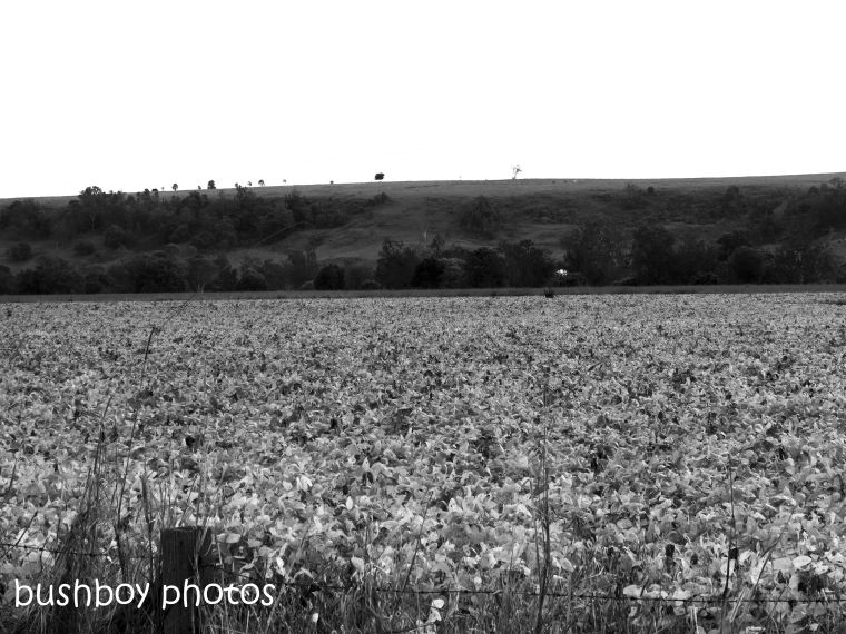 181130_blog challenge_blackandwhite_field_soy