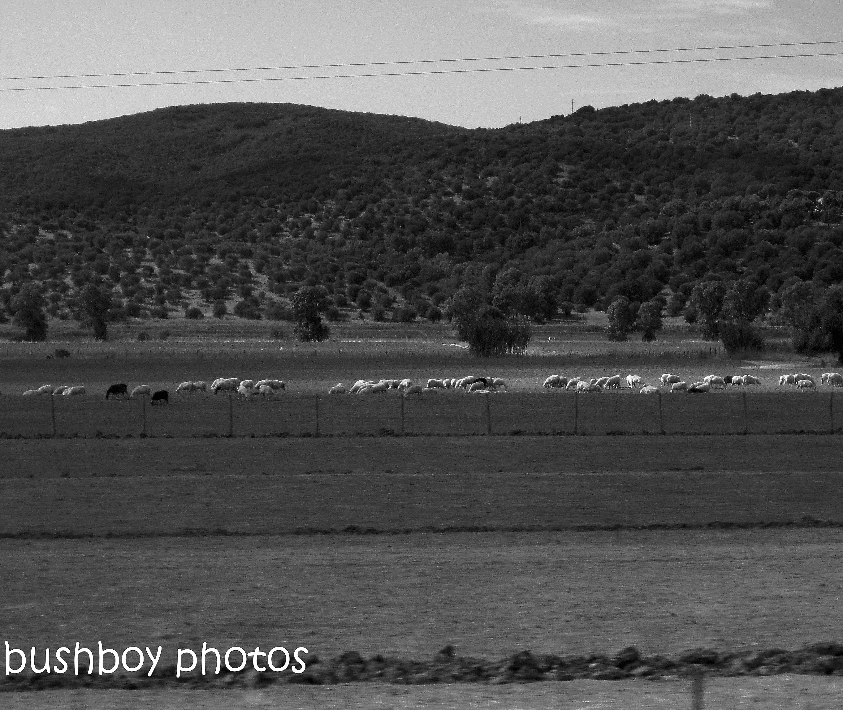 181130_blog challenge_blackandwhite_field_spain