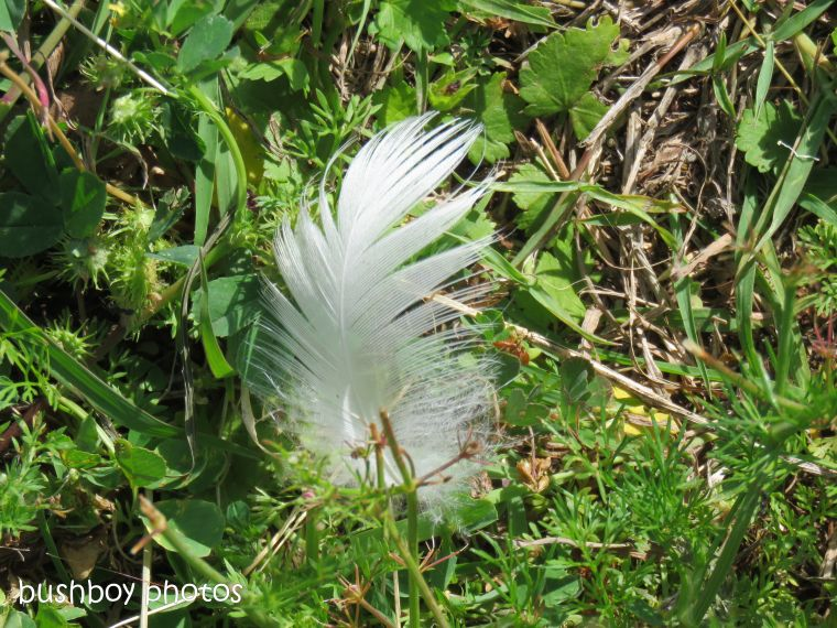 feather_grass_named_caniaba_oct 2018