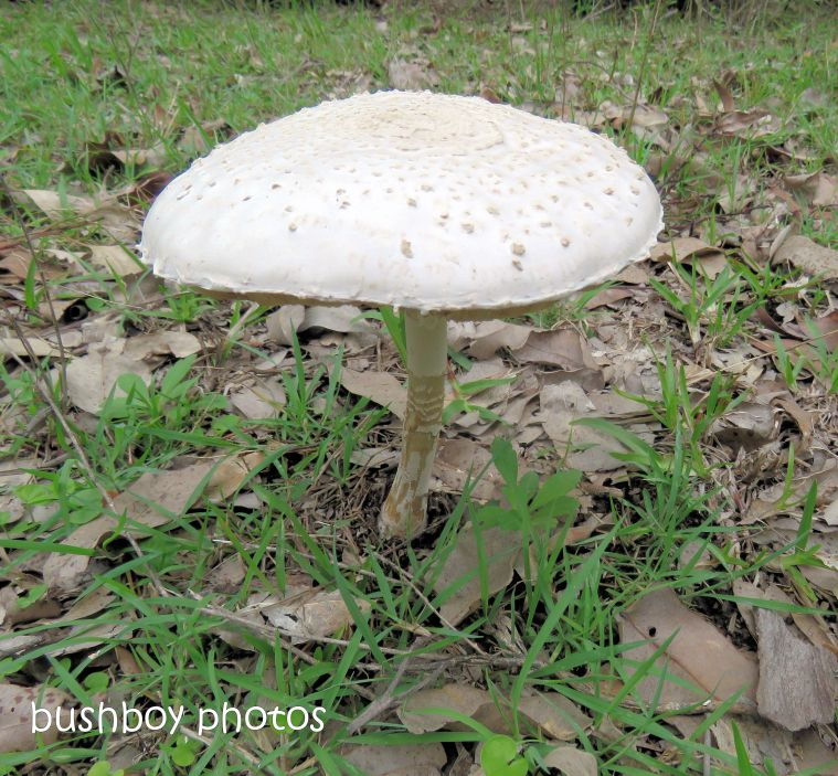 fungus_white_named_home_oct 2018