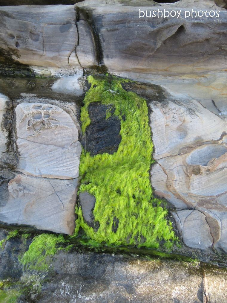 moss_rocks_beach_named_evans head_oct 2018