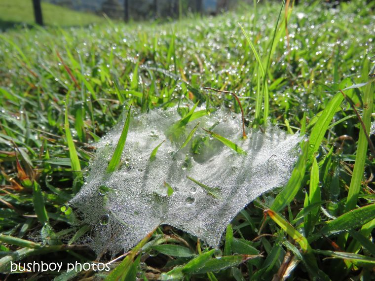 spider_web_grass_named_caniaba_oct 2018