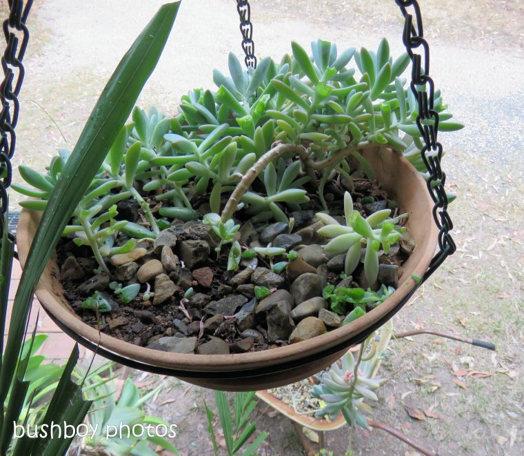 succulent_hanging pot_named_home_oct 2018