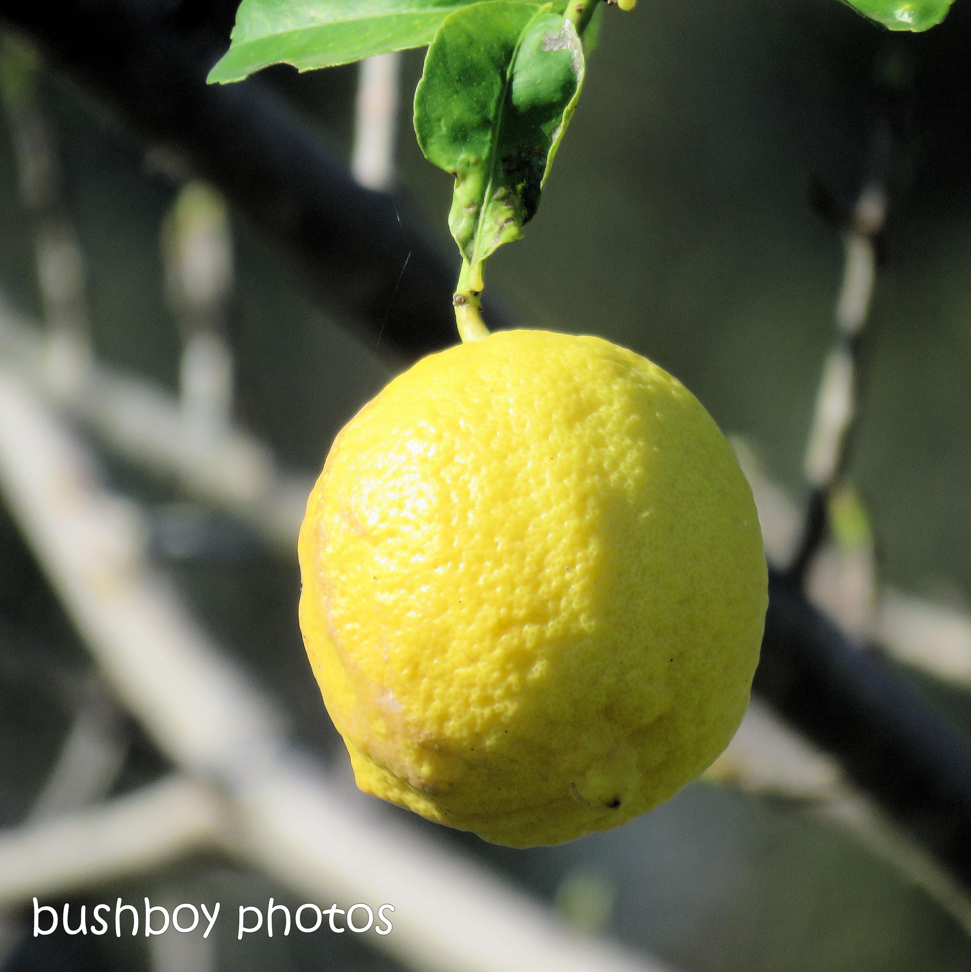 181207_time_square_lemon_sour_time