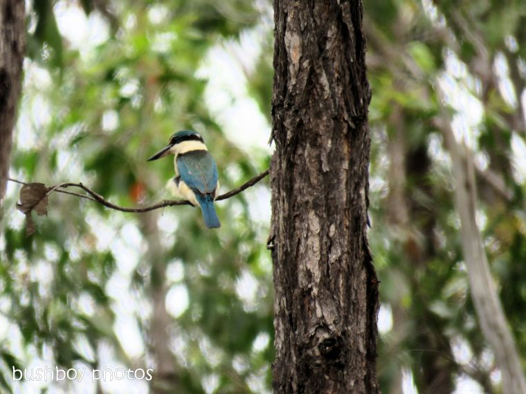 forest_kingfisher_tree_named_home_dec 2018