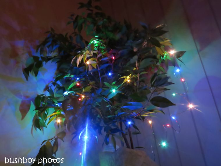 lights_tree_christmasl_named_caniaba_dec 2018