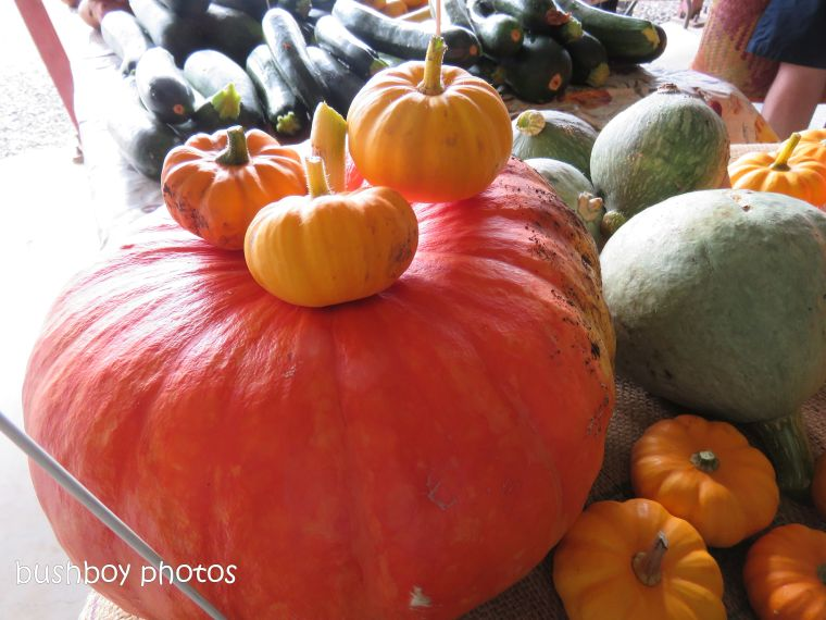 pumpkins_named_lismore_farmers_market_dec 2018
