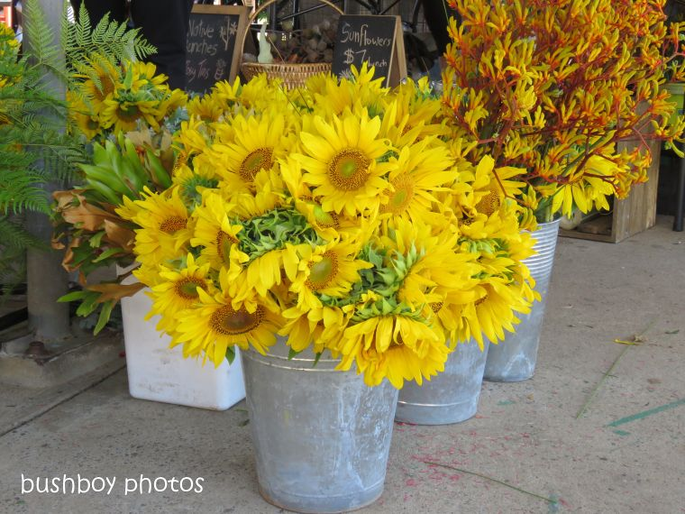 sunflowers_lismore_farmers_market_named_nov 2018