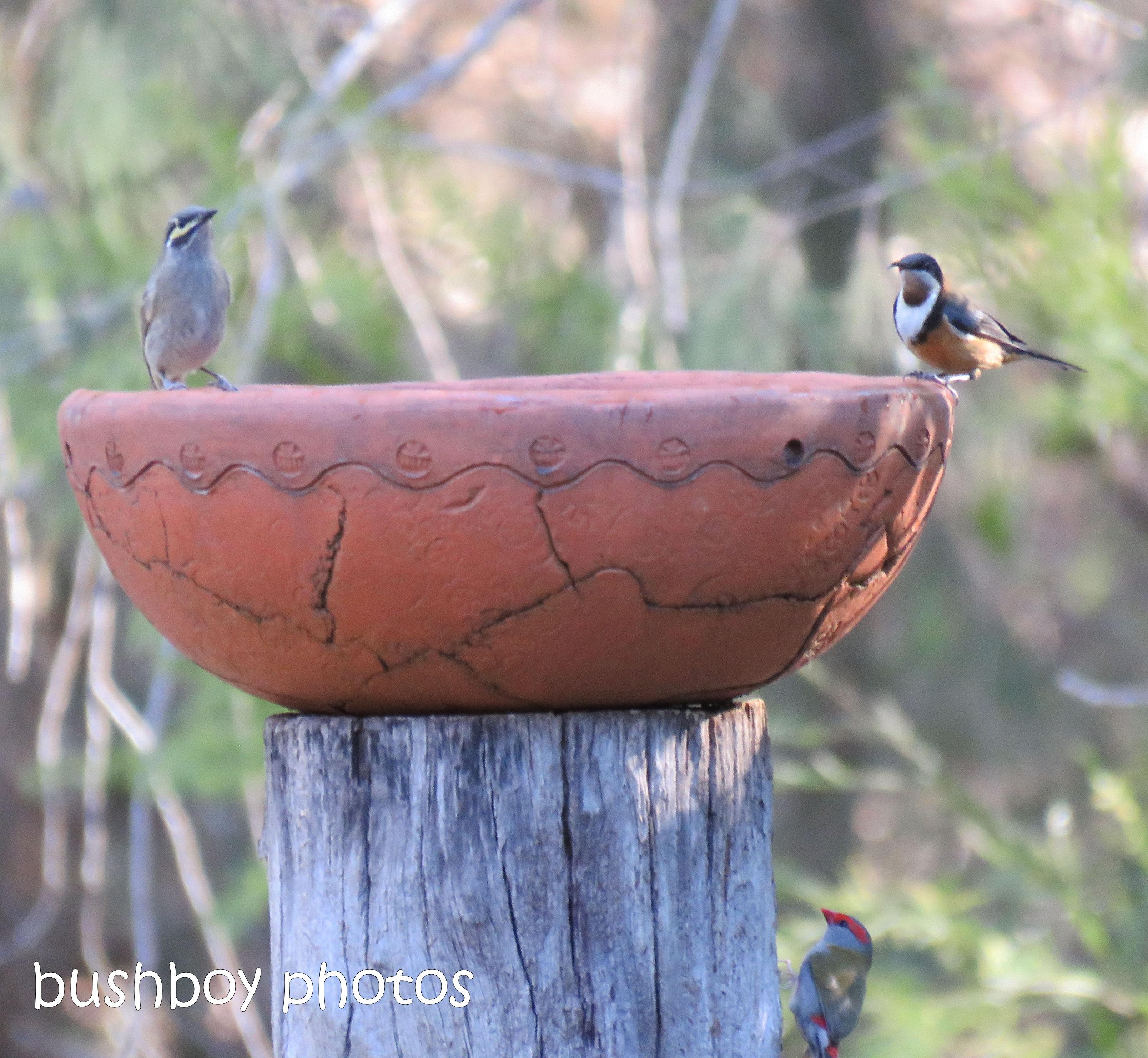 190106_blog_challenge_three_bird_bath1