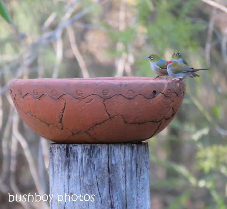 190106_blog_challenge_three_bird_bath2