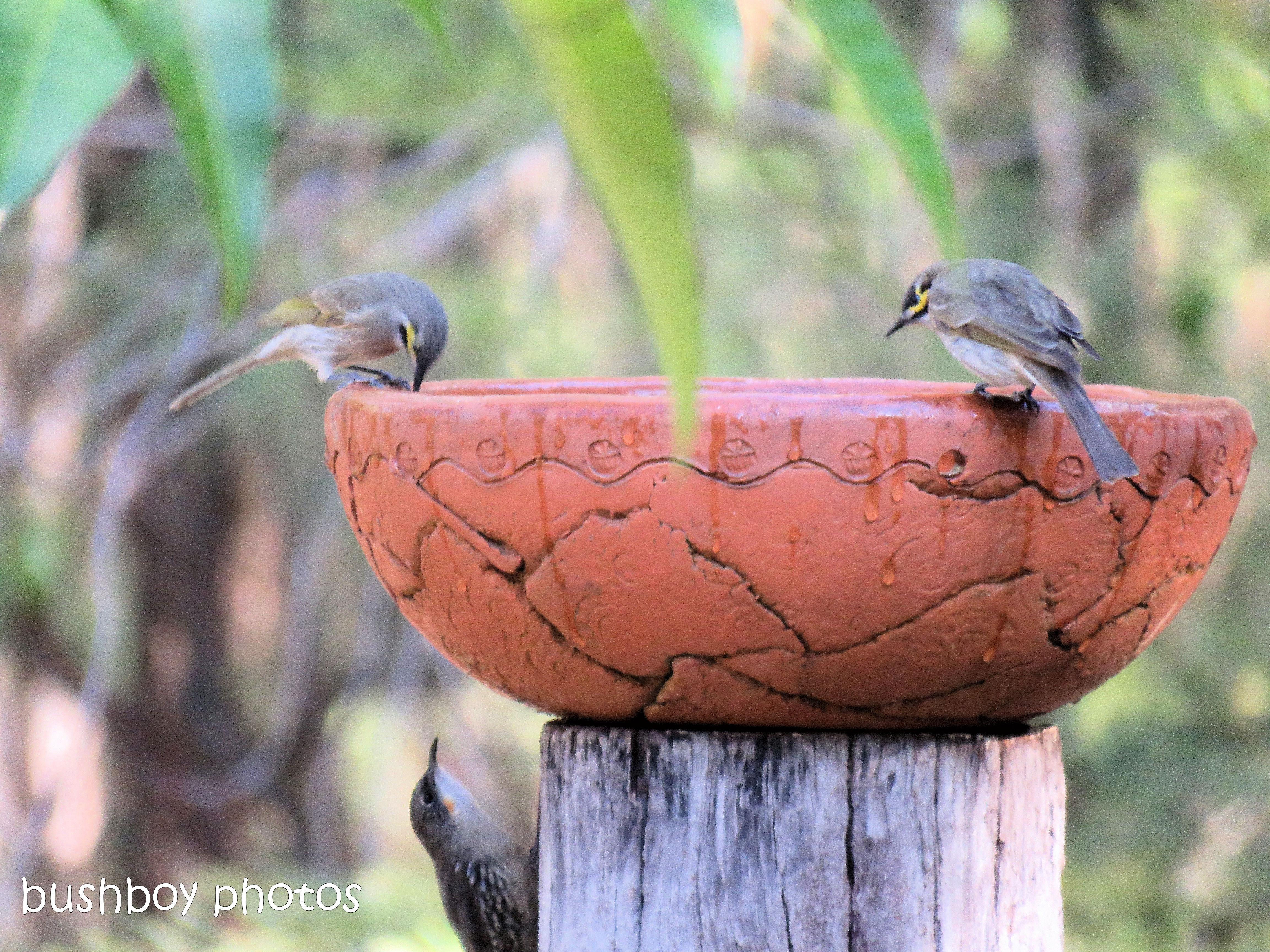 190106_blog_challenge_three_bird_bath3