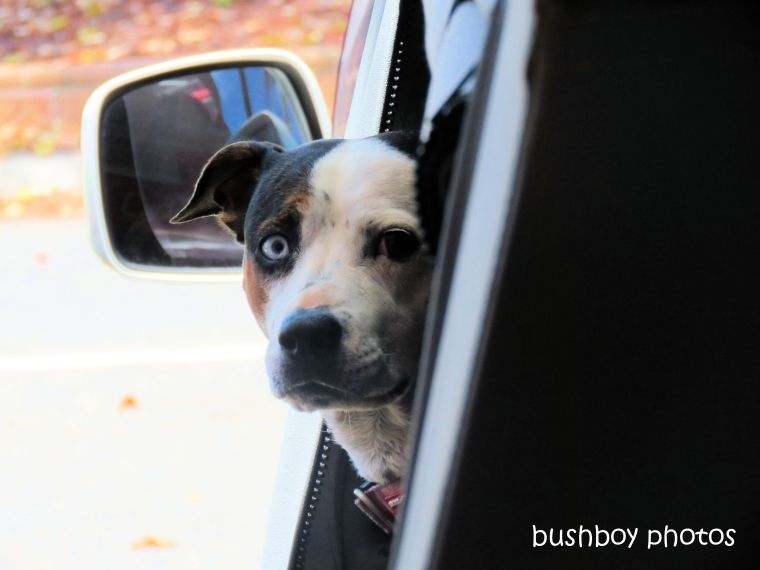 190111_blog_challenge_which_way_dog_car