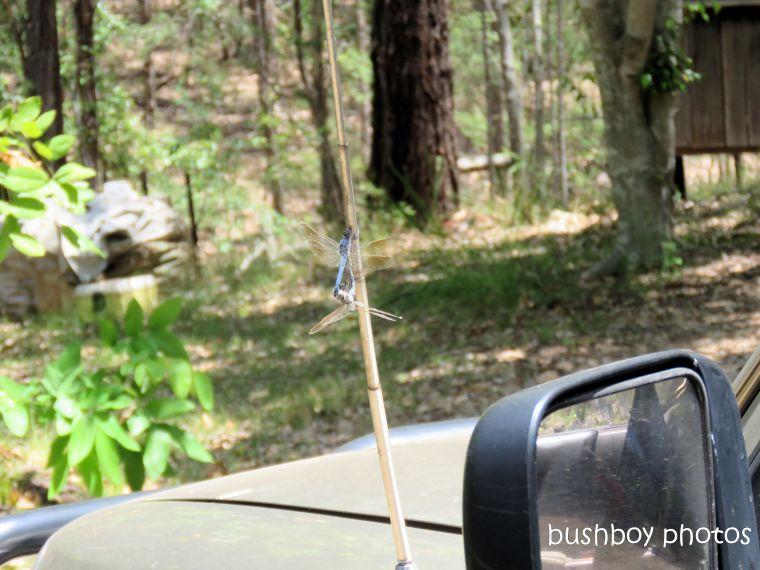 190115_blog_post_dragonflies2_sex_car