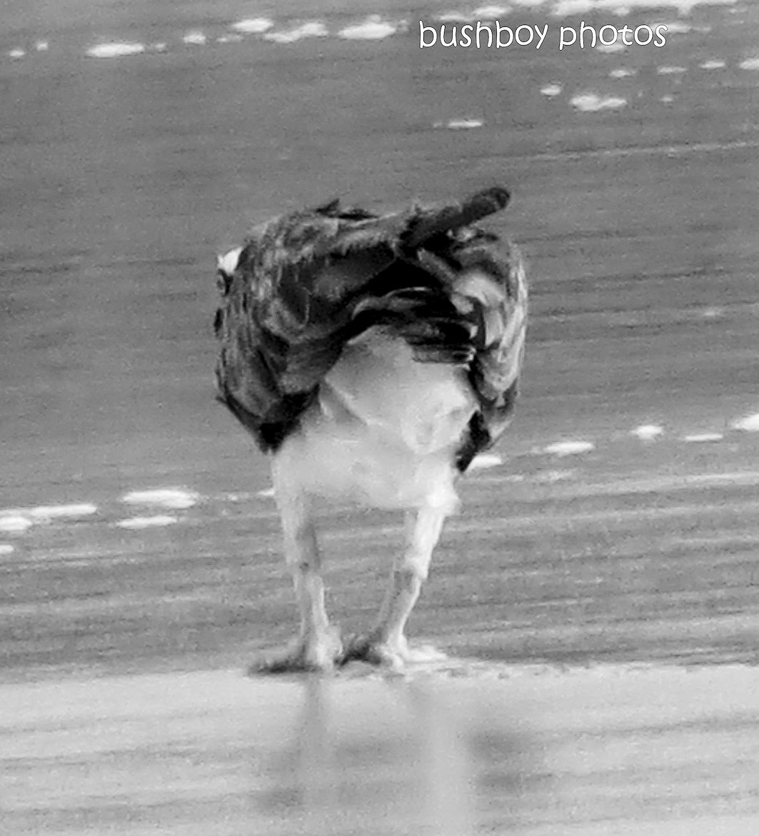 190117_blog_challenge_blackandwhite_unusual_perspective_osprey