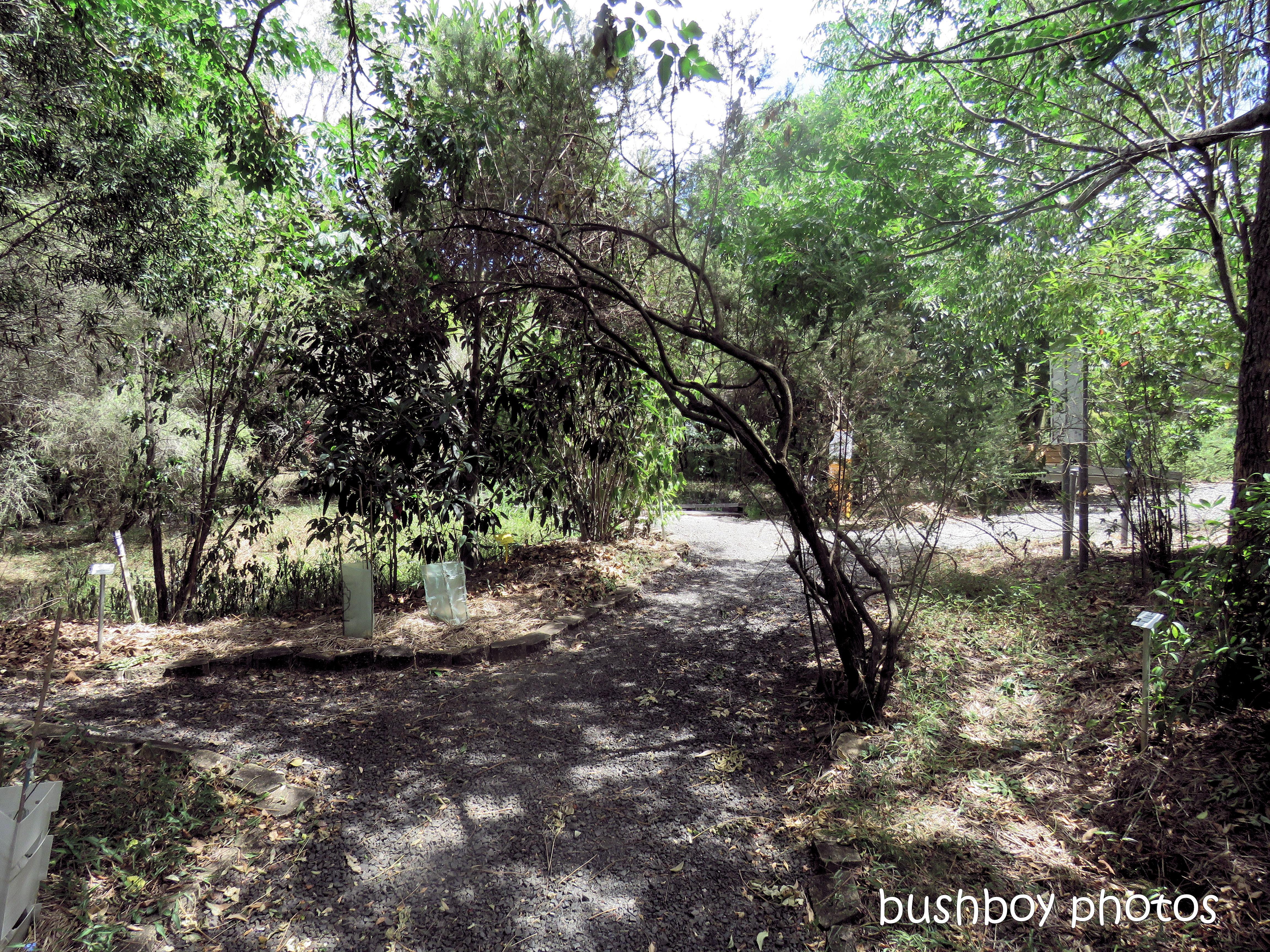 lismore_botanical_gardens_paths_bridges1_jan 2019 (1)