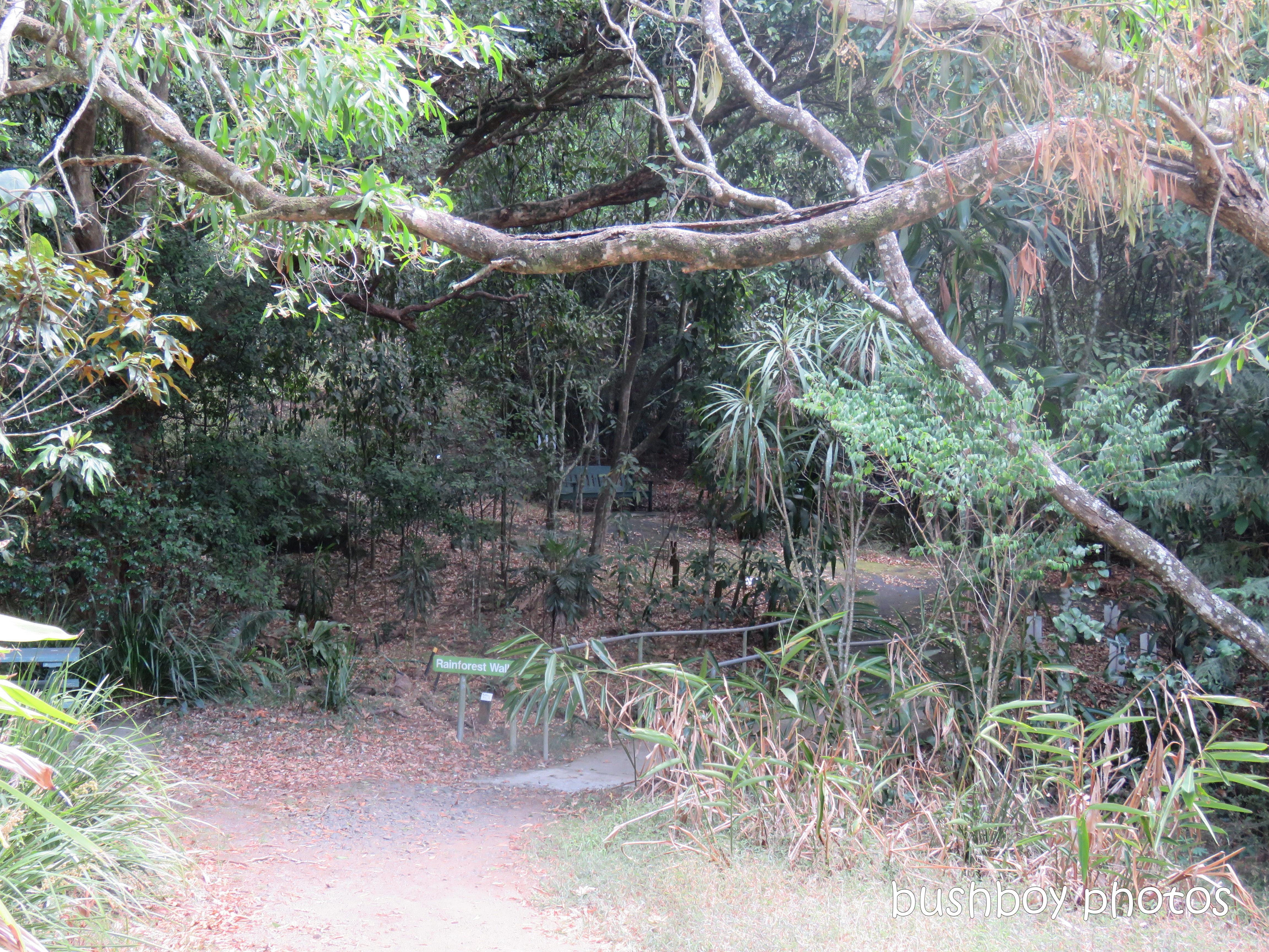 lismore_botanical_gardens_paths_bridges1_jan 2019 (10)