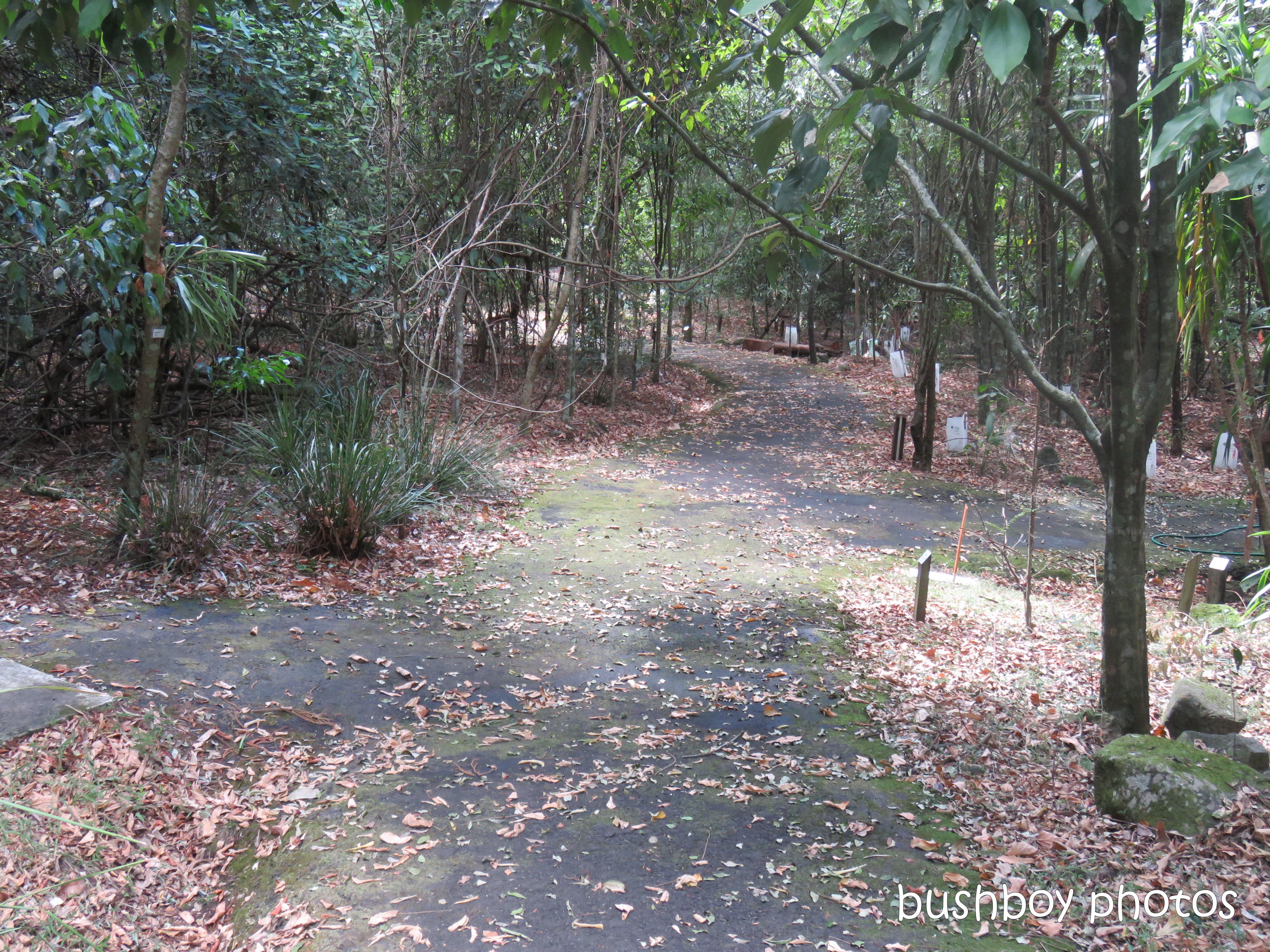 lismore_botanical_gardens_paths_bridges1_jan 2019 (11)