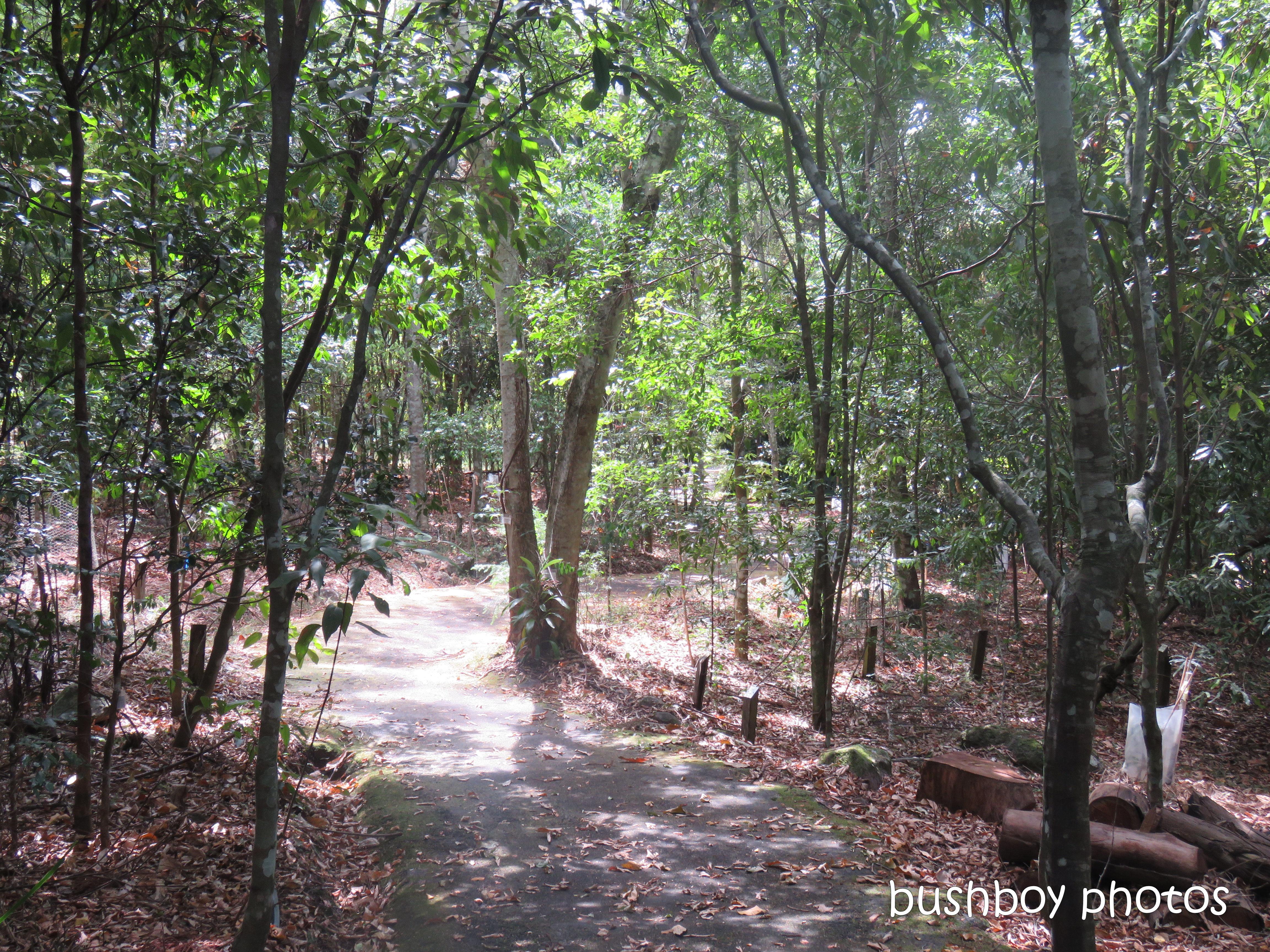 lismore_botanical_gardens_paths_bridges1_jan 2019 (12)