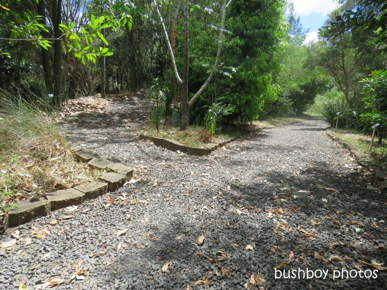lismore_botanical_gardens_paths_bridges1_jan 2019 (2)