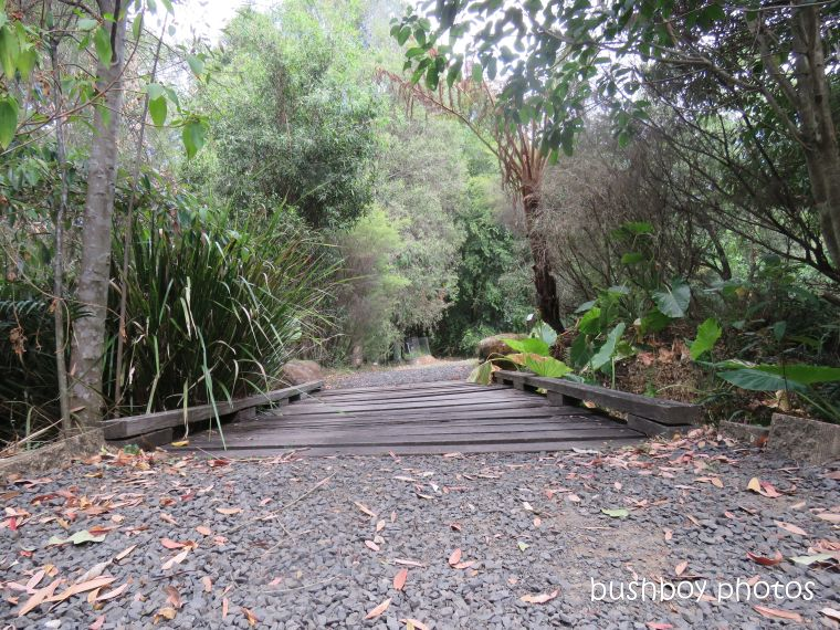 lismore_botanical_gardens_paths_bridges1_jan 2019 (3)