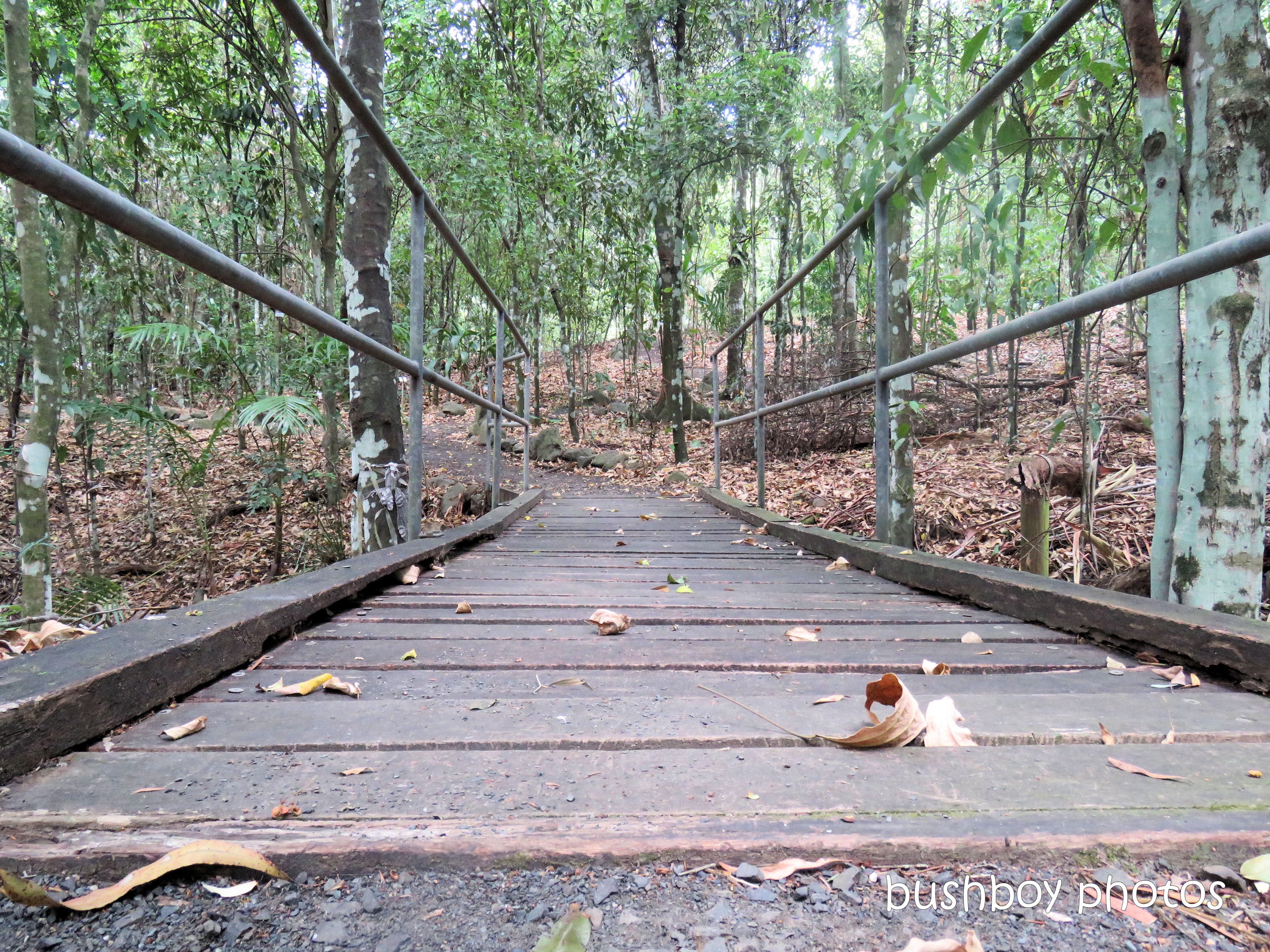 lismore_botanical_gardens_paths_bridges1_jan 2019 (4)