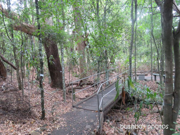 lismore_botanical_gardens_paths_bridges1_jan 2019 (5)