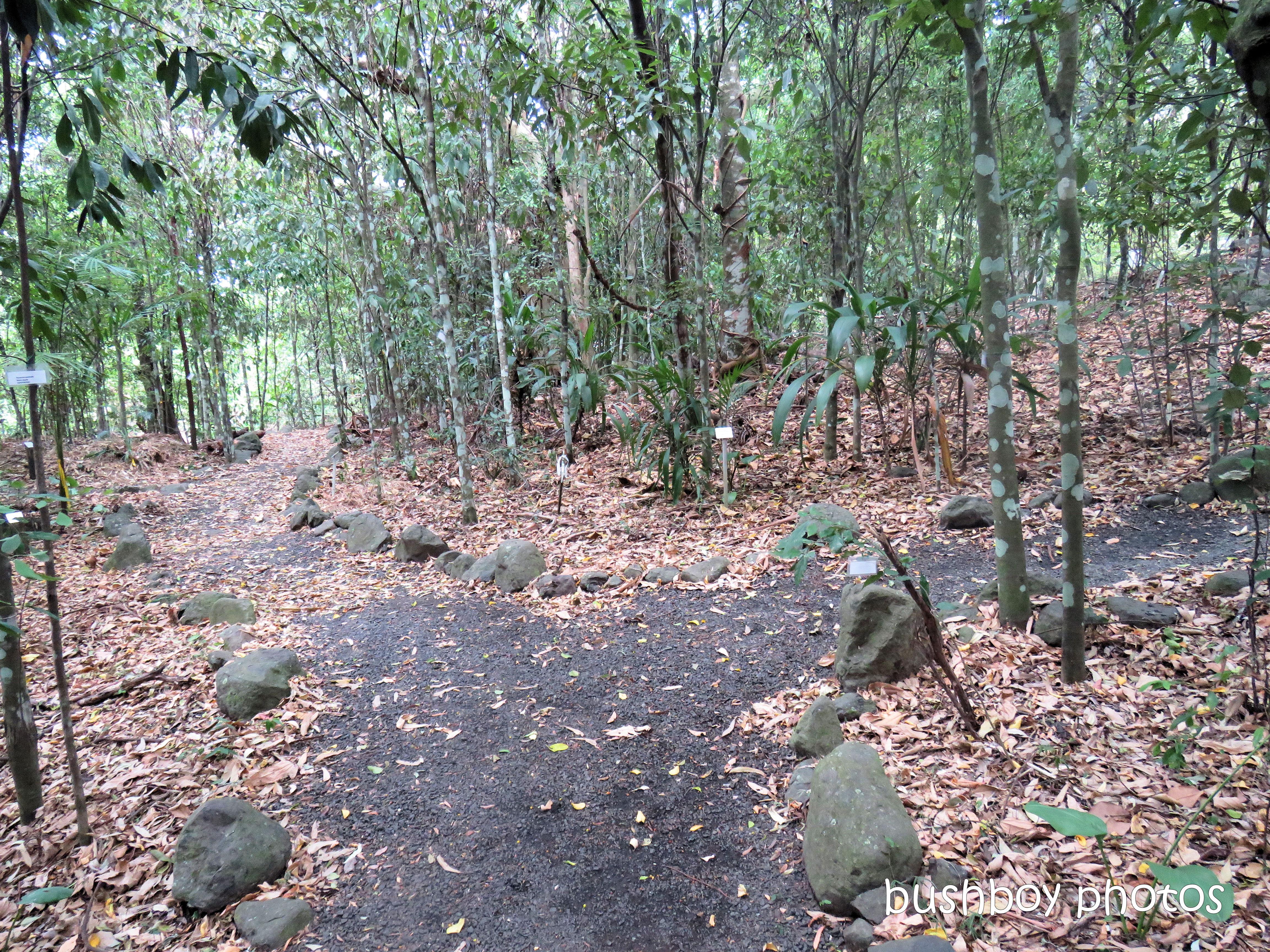 lismore_botanical_gardens_paths_bridges1_jan 2019 (6)