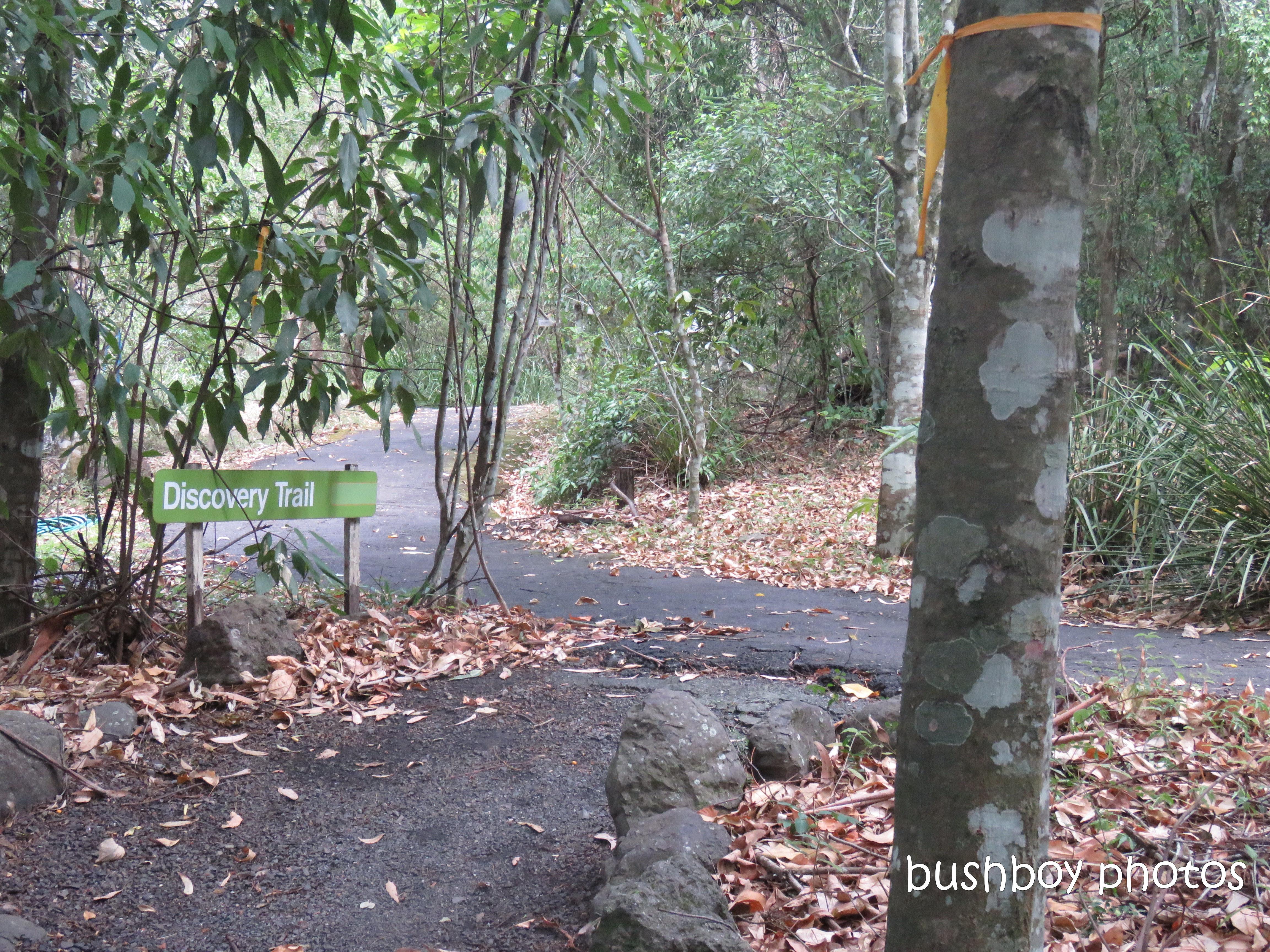 lismore_botanical_gardens_paths_bridges1_jan 2019 (7)