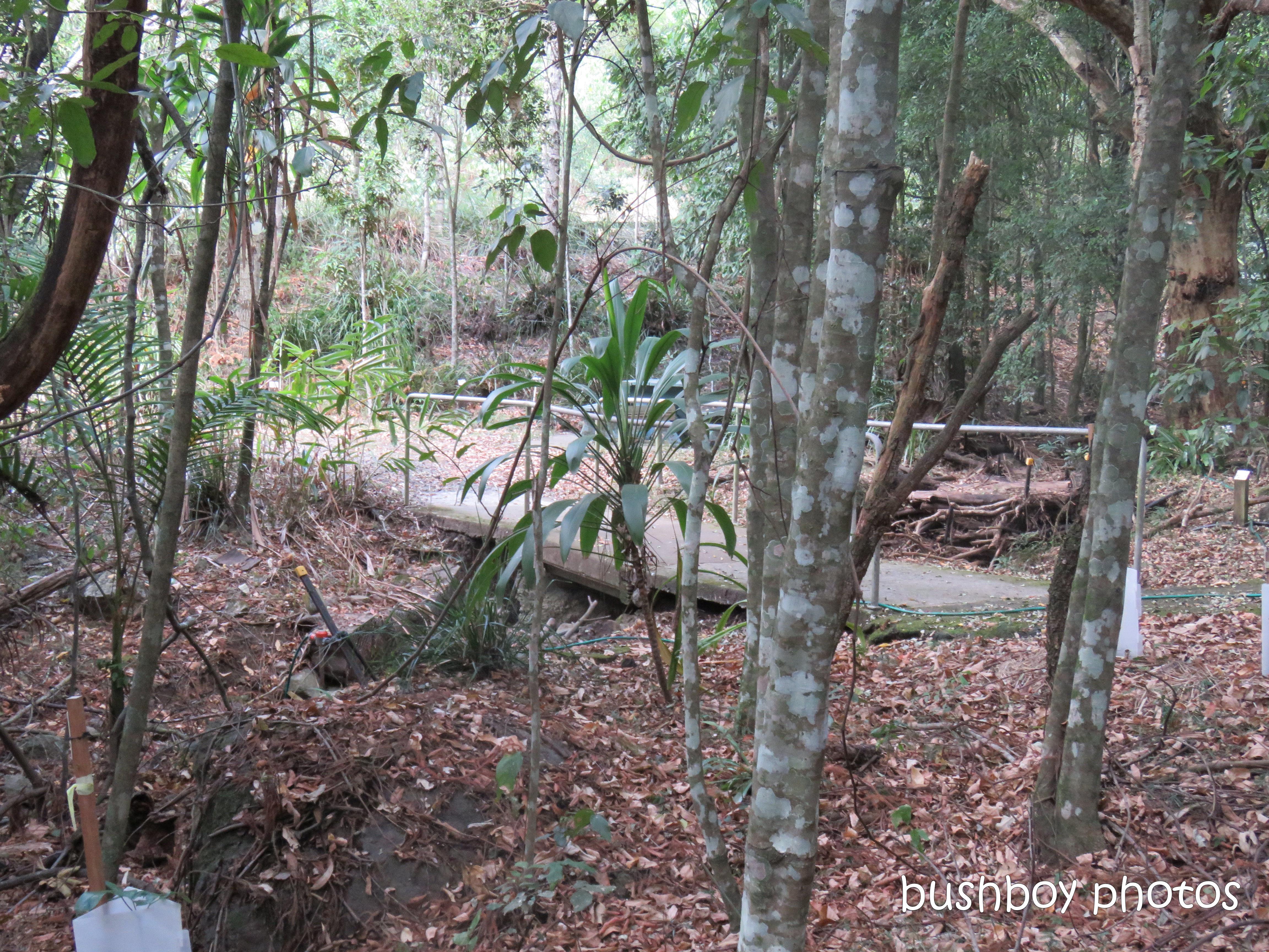 lismore_botanical_gardens_paths_bridges1_jan 2019 (8)