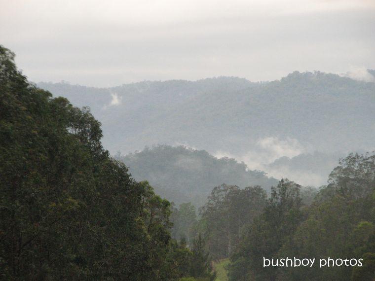 190227_blog_challenge_trees1_mist