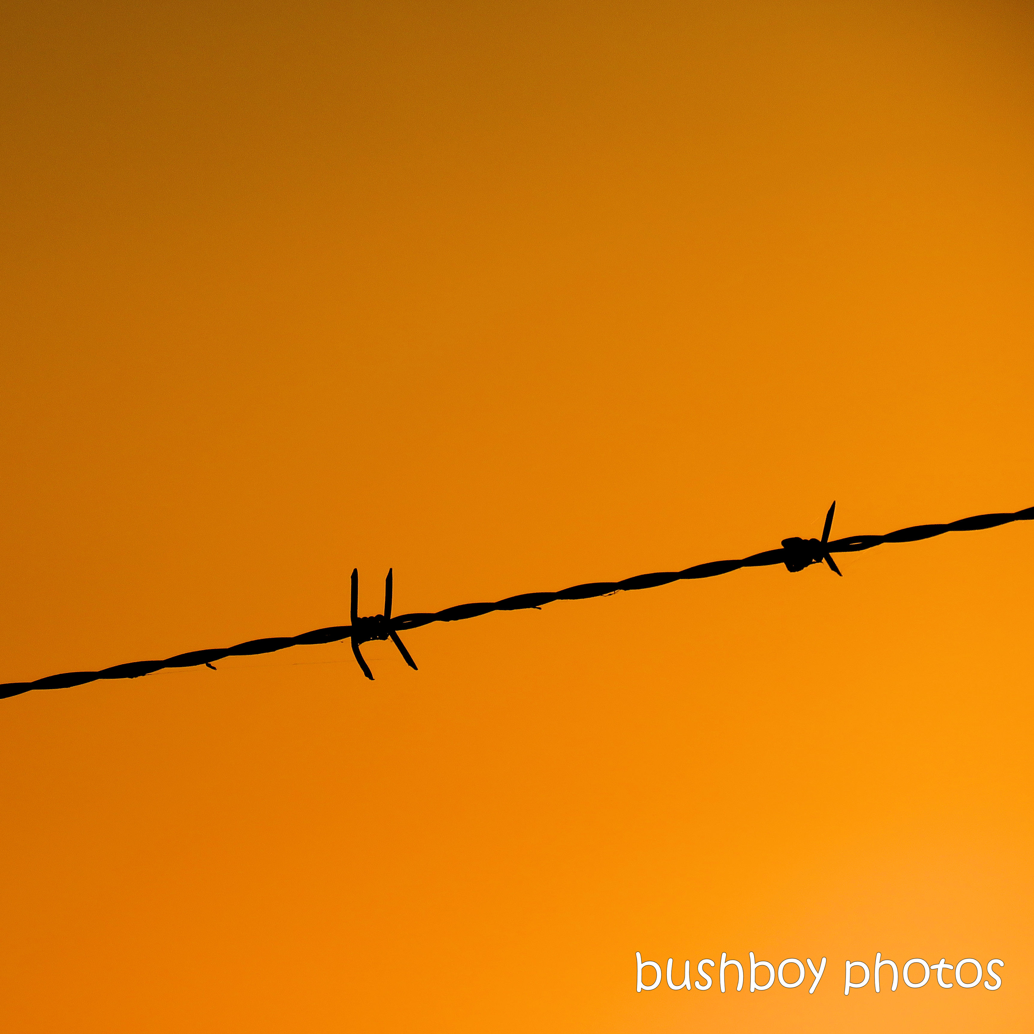 190302_spiky_square_barbed_wire
