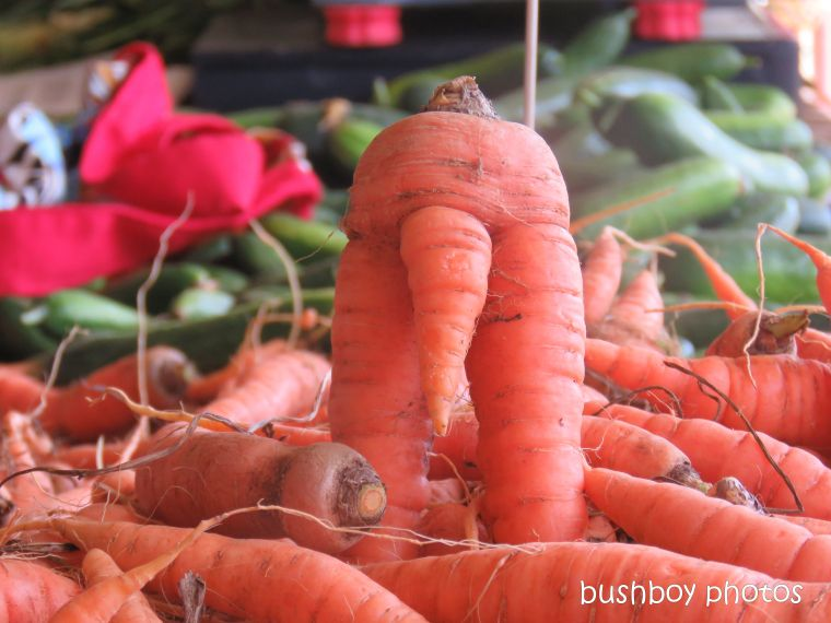 carrot_lismore_markets_rude_jan 2019