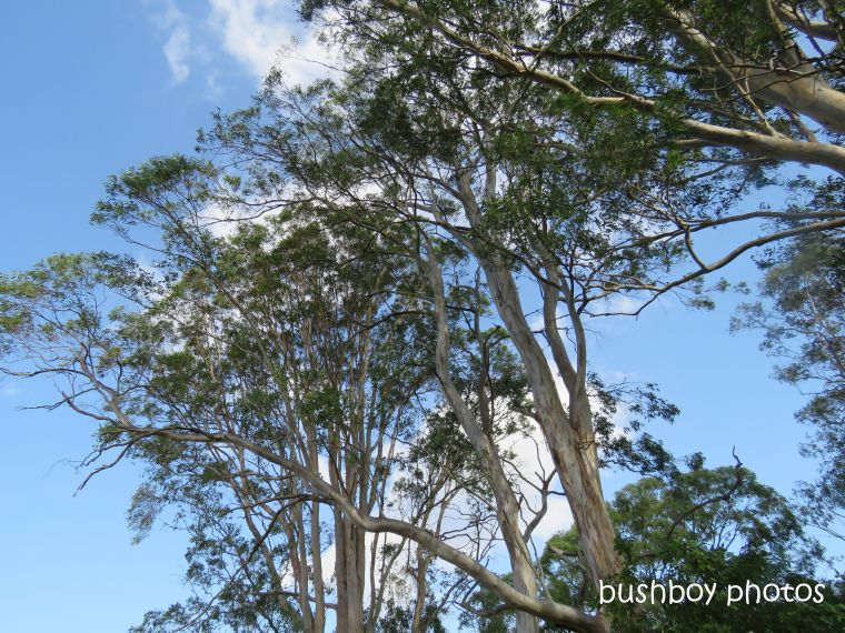 koala_spotting1