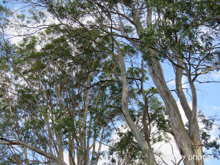 koala_spotting2