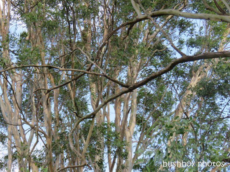 koala_spotting3