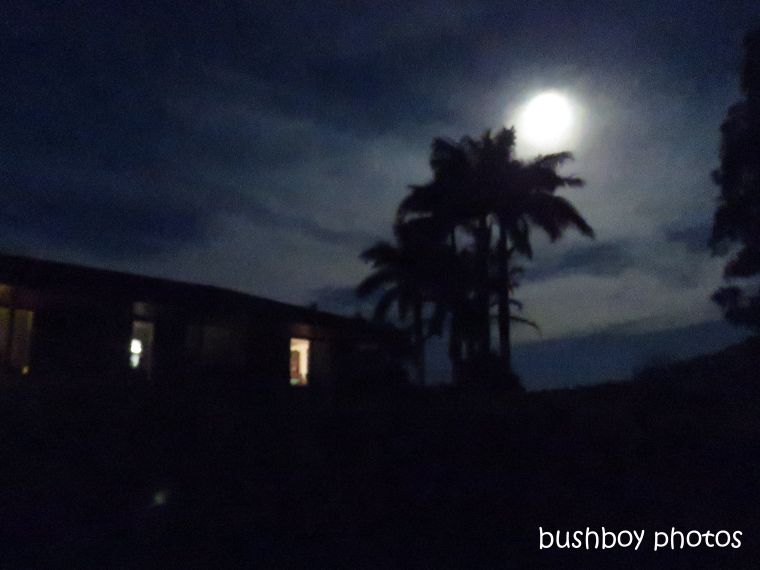 moon_full_night_house_palms_named_caniaba_jan 2019