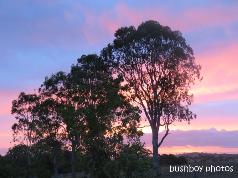 sunset_blues_caniaba_jan 2019