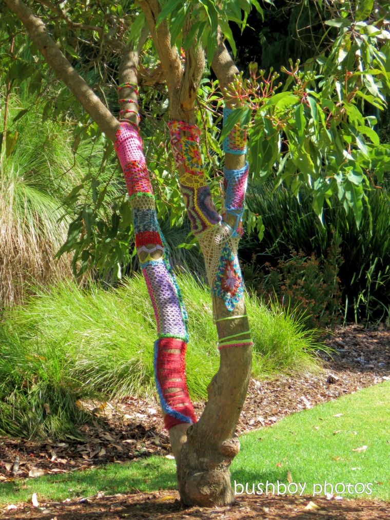 tree_yarn_bombing_named_toowoomba_jan 2019