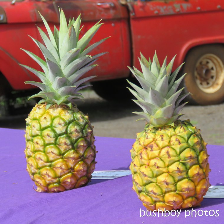 190309_spiky_square_pineapples