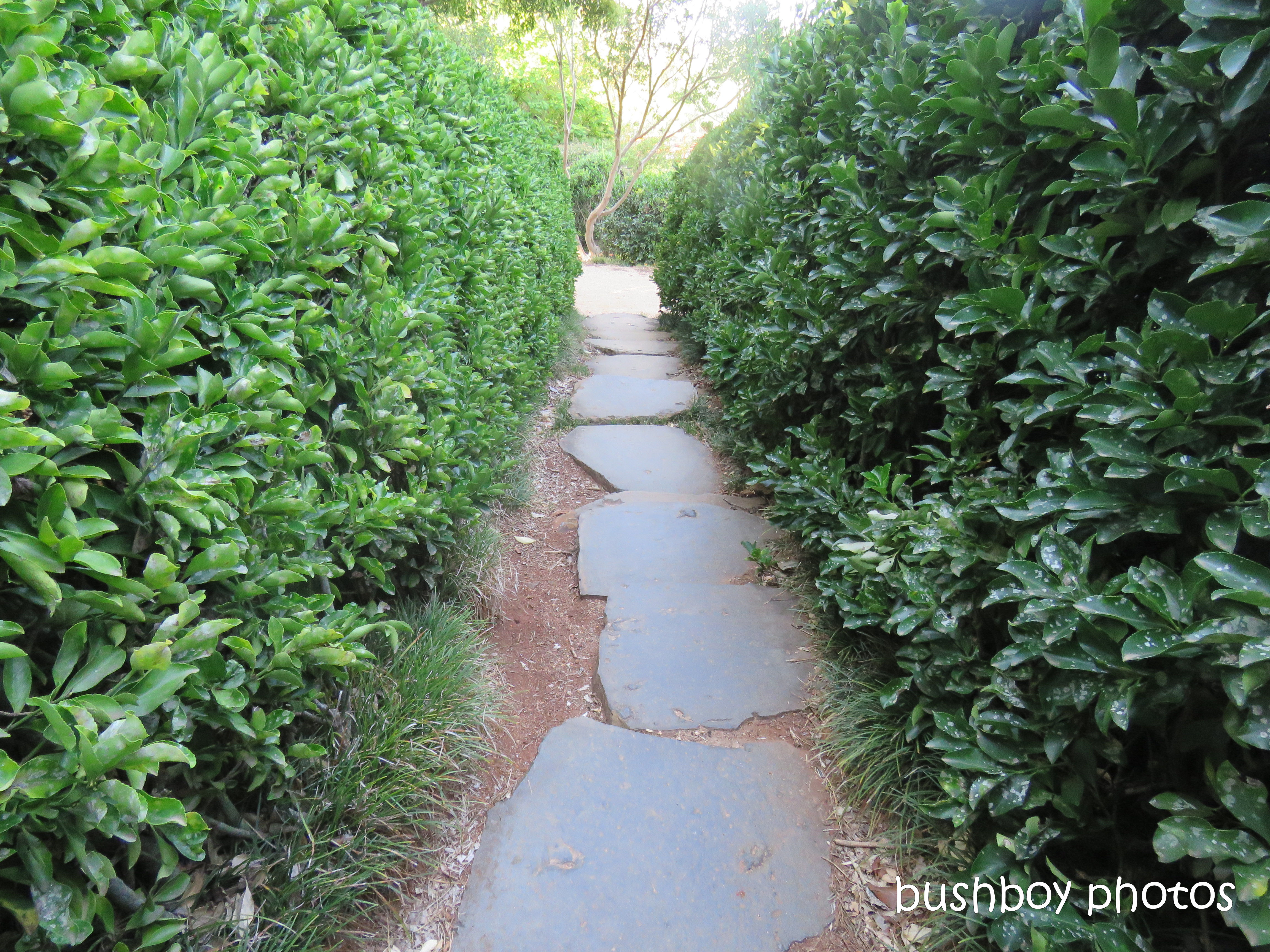190314_blog_challenge_which_way_toowoomba_japanese_garden_path