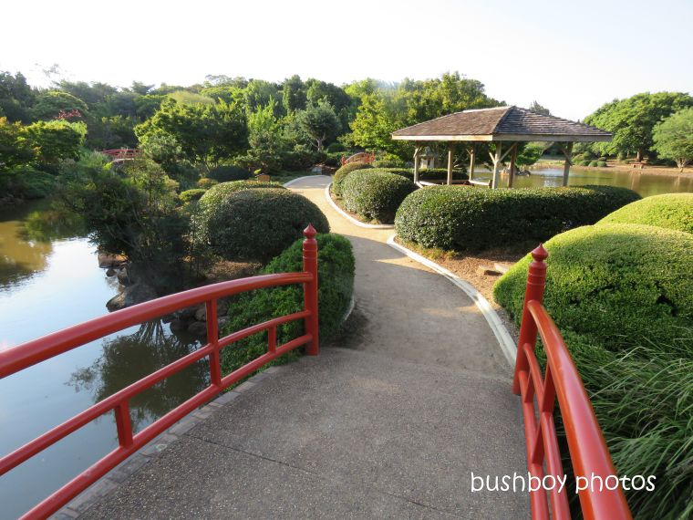 190314_blog_challenge_which_way_toowoomba_japanese_garden_path_bridge
