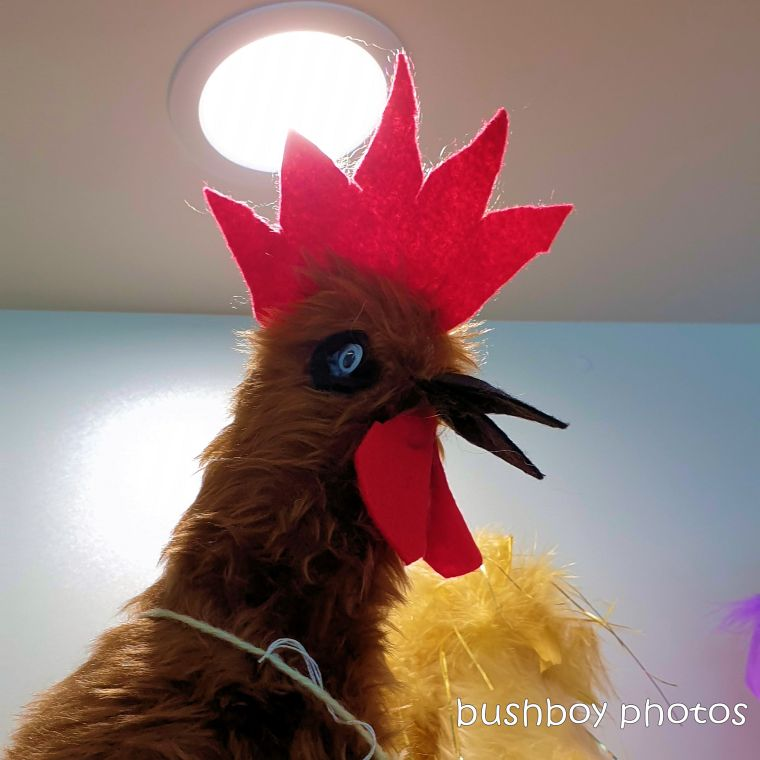 190314_spiky_square_shop_chooks2