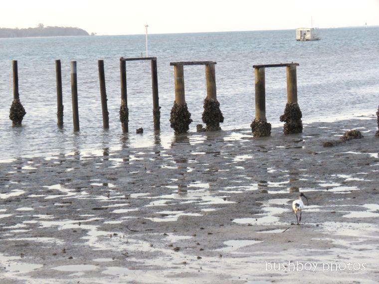 190321_blog_challenge_row_piers_macleay_island