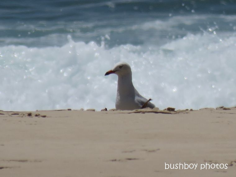 gull_beach_evans head_feb 2019