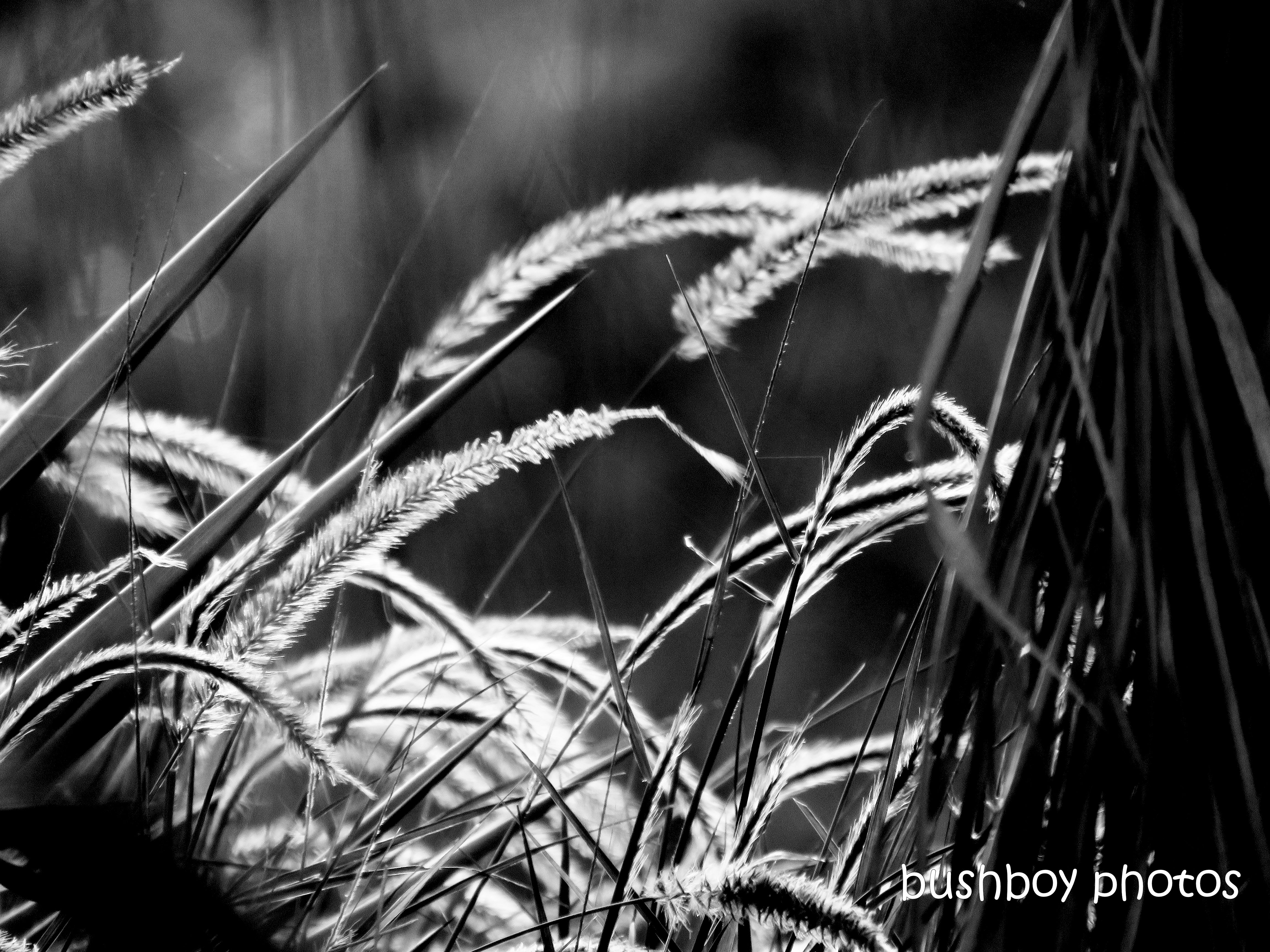 190403_blog_challenge_monochrome_wednesday_grass.jpg